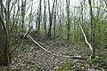 Motte op de Butsberg te Tielt-Winge - 371163 - onroerenderfgoed.jpg