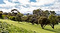 Mount Gambier (AU), View from Mount Gambier -- 2019 -- 0722.jpg