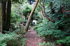 Mount Gulaga - The Rainforest Track at Mount Gulaga.