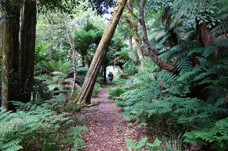 File:Mount Gulaga Rainforest Track.jpg