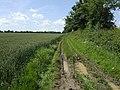 Muddy bridleway by Sycamore Farm - geograph.org.uk - 473592.jpg