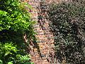 Mur du jardin de Cysoing.jpg