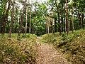 NP Podyjí, lesní cesta u Popic (2).jpg