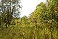 NSG Steinbruch Holzmühle (110).jpg
