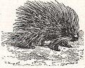 NSRW Porcupine 2.jpg