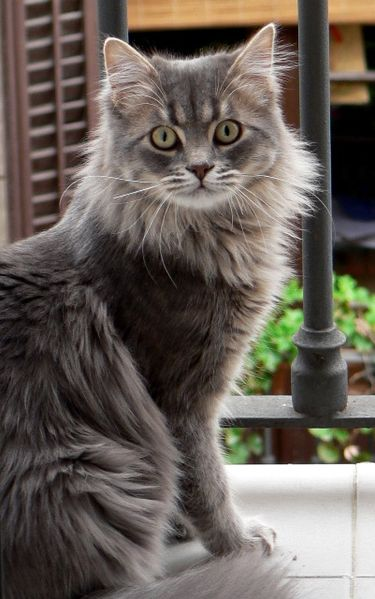 Imagen:Nagec cat.jpg