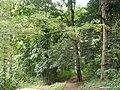 Nairobi Arboretum Park 38.JPG