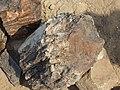 Namibia - P9133878 (15284215556).jpg