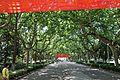 Nanjing uni avenue.jpg