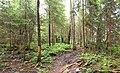 Nastola - forest.jpg