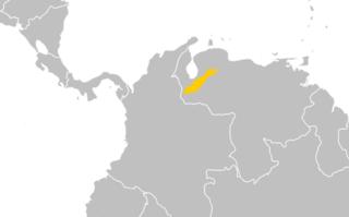 <i>Nasuella meridensis</i> species of mammal