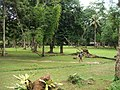 Nationak park Panom Bencha - Národní park Panom Bencha - panoramio - Thajsko (3).jpg