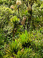 Native New Zealand Forrest (5928226531).jpg