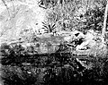 Native examining petroglyphs at St. Johns near Reef Bay. Virgin Islands National Park. (d561633d4dc840efa5c0e69c57e872c2).jpg