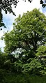 Naturdenkmal 607 sl2.jpg
