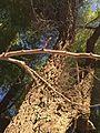 Nature pk2.jpg