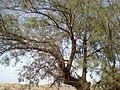 Navidhand new 300 - panoramio.jpg