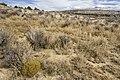 Near Cañon Medio - Flickr - aspidoscelis.jpg