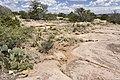 Near Caracita Creek - Flickr - aspidoscelis.jpg