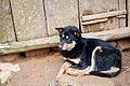 Nervous Guard Dog.jpg
