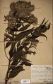 Neuchatel Herbarium Types NEU000113039.tif
