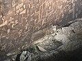 Newspaper Rock, Petrified Forest NP 03.jpg