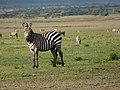 Ngorongoro (10) (14168842663).jpg