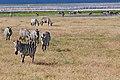 Ngorongoro 2012 05 30 2424 (7500929558).jpg