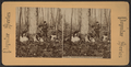 Niagara. Gathering wild flowers on Goat Island, from Robert N. Dennis collection of stereoscopic views.png
