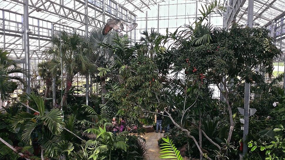 Nicholas Conservatory interior