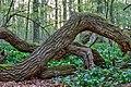 Nordkirchen, Naturschutzgebiet Ichterloh -- 2018 -- 2079-83.jpg