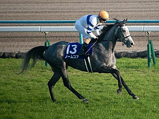 Normcore (horse) Japanese Thoroughbred racehorse