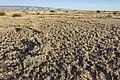 North-northeast of Twin Buttes - Flickr - aspidoscelis (9).jpg