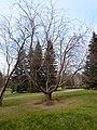 Novosibirsk, Novosibirsk Oblast, Russia - panoramio (4).jpg