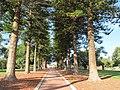 OIC mosman park memorial trees 3.jpg