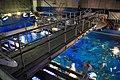 Oga Aquarium GAO - panoramio.jpg
