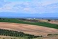 Olives orchards, Ceyhan - Adana 08.JPG