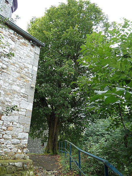 Nailtree of Le Fief next to the church, Olne, Belgium