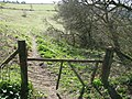 On the footpath above Minterne - geograph.org.uk - 1225901.jpg