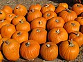 One of many from Clancy's Pumpkin Patch (22500111475).jpg