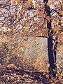 Oran, 06450 Çankaya-Ankara, Turkey - panoramio (13).jpg