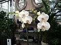 Orchideen - panoramio.jpg