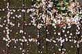 Organic confetti.JPG