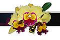 Orquidea (1813144898).jpg