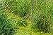 """Osterholz-Scharmbeck, Naturschutzgebiet """"Breites Wasser"""" -- 2018 -- 3013.jpg"""