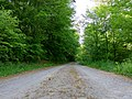 Other Road Winterbach Forest.jpg