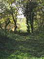 Out of the shadows into the sun - geograph.org.uk - 605767.jpg
