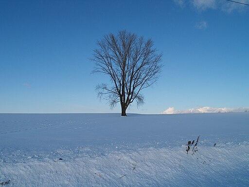 P1010220哲学の木
