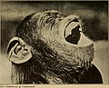 Pain and pleasure (1917) (14596852489).jpg