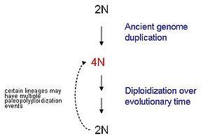 Paleopolyploidy